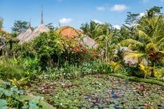 Kwitnący biały i różowy Wodny Lilly w stawowych pobliskich tradycyjnych domach z pokrywającymi strzechą dachami Ubud, Bali, Indon fotografia stock
