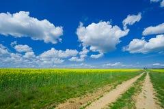 Kwitnący colzafield pod niebieskim niebem z białymi chmurami obraz royalty free
