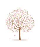 Kwitnący drzewo na białym tle Obraz Stock