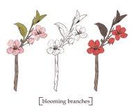 kwitnący drzewo Ustawia kolekcję Ręka rysujący botaniczny okwitnięcie rozgałęzia się na białym tle również zwrócić corel ilustrac ilustracji