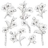kwitnący drzewo Ustawia kolekcję Ręka rysujący botaniczny okwitnięcie rozgałęzia się na białym tle również zwrócić corel ilustrac royalty ilustracja
