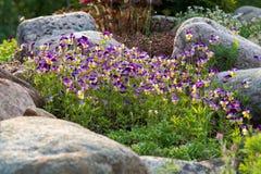 Kwitnący fiołki i inni kwiaty w małym rockery w lecie uprawiają ogródek fotografia stock