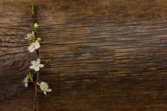 kwitnący gałęziasty śliwkowy drzewo Obrazy Stock