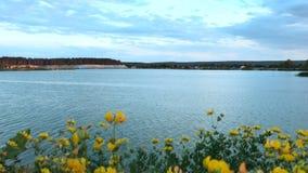 Kwitnący kolor żółty kwitnie na tle Błękitny jezioro zbiory