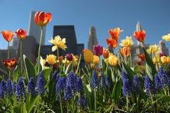 Chicago w kwiacie Zdjęcia Royalty Free