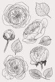 Kwitnący kwiat Ustawia kolekcję Ręka rysujący botaniczny okwitnięcie rozgałęzia się na białym tle również zwrócić corel ilustracj ilustracja wektor