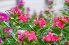 Kwitnący kwiaty drewno pełno Obrazy Royalty Free