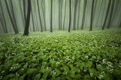 Kwitnący las z mgłą i kwiatami na ziemi zdjęcia royalty free
