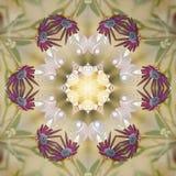 Kwitnący mandala z Yang ilustracja wektor