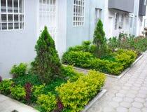Kwitnący ogród pod okno, zielony jałowcowy krzak obraz royalty free