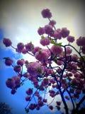Kwitnący okwitnięcie z niebieskim niebem i chmurą na tle fotografia stock