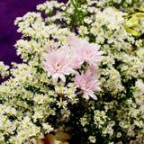 Kwitnący piękny menchia kwiat dla dekoraci Zdjęcia Stock