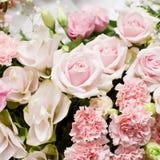 Kwitnący piękny menchia kwiat dla dekoraci Zdjęcia Royalty Free