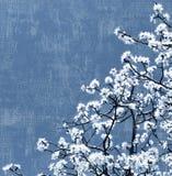 kwitnący tła drzewo Obrazy Royalty Free