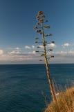 Kwitnąca agawa Costa Brava, Hiszpania Obrazy Royalty Free
