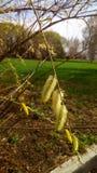 Kwitnąca natury wiosna Zdjęcie Royalty Free