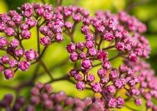 Kwitnący abstrakt zdjęcia stock