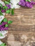 Kwitnący bez kwitnie na starym drewnie Obraz Stock