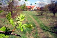kwitnący drzewo Zdjęcia Royalty Free