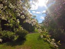 kwitnący drzewo Obrazy Stock