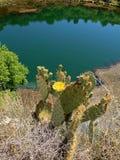 Kwitnący kaktus przy Montezuma Well Obrazy Royalty Free