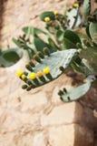 Kwitn?cy kaktus z prickles i kolor obrazy royalty free