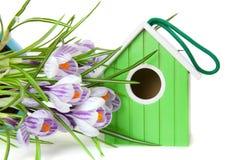 Kwitnący krokusy i zielony birdhouse Zdjęcie Royalty Free