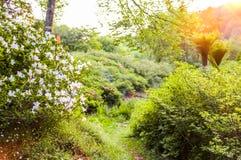 Kwitnący krzak Zdjęcie Royalty Free