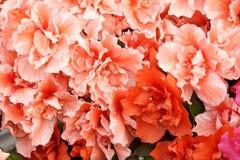 kwitnący kwiaty zdjęcia stock