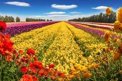 Kwitnący pole zdjęcia stock