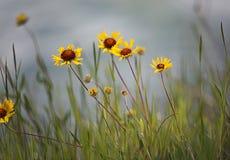 Kwitnący przy Banff parkiem narodowym, Kanada obrazy stock