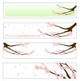 Kwitnący Sakura Fotografia Royalty Free