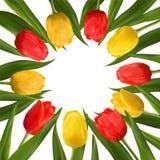 Kwitną tulipany dla eighth Marzec Zdjęcia Royalty Free