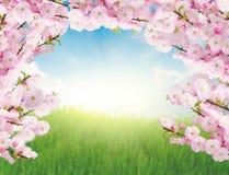 Kwitnący drzewni śniadanio-lunch i zielona trawa Fotografia Royalty Free
