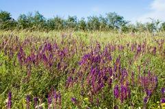 kwitnie łąkę zdjęcie royalty free
