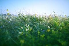 kwitnie łąkę Obraz Royalty Free