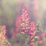 kwitnie łąkę zdjęcia stock