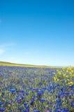 kwitnie łąkę Obrazy Royalty Free