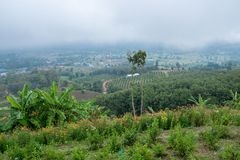 Kwitnie łąkę na górze z mgiełką na tła i wsi widoku Zdjęcia Royalty Free