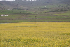 kwitnie łąkowego kolor żółty zdjęcie stock