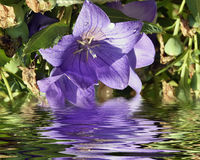 kwitnie ładnego zdjęcie stock
