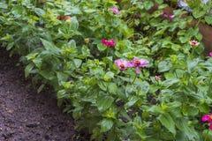 kwitnie świeżego ogród zdjęcia stock