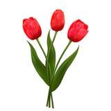 Kwitnie żółtych tulipany Obrazy Royalty Free