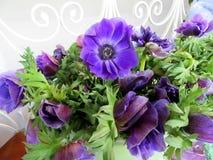 Kwitnie anemony Fotografia Stock