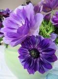 Kwitnie anemony Obrazy Stock
