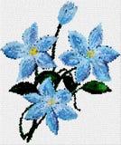 kwitnie błękitnego clematis Fotografia Royalty Free