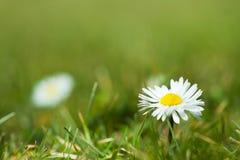 kwitnie biel Obraz Stock