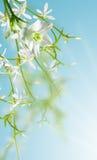 kwitnie biel Zdjęcia Stock