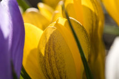kwitnie bogatą wiosna Zdjęcia Stock
