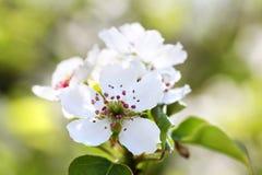 Kwitnie bonkrety na zielonym tle miasto dni drogi ramenskoye Moscow najbliższa park do sunny wiosna fotografia stock
